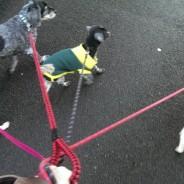 Guardería para mascotas
