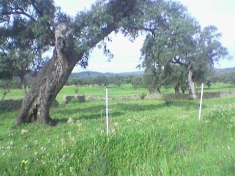 suelo en venta en provincia huelva , aracena